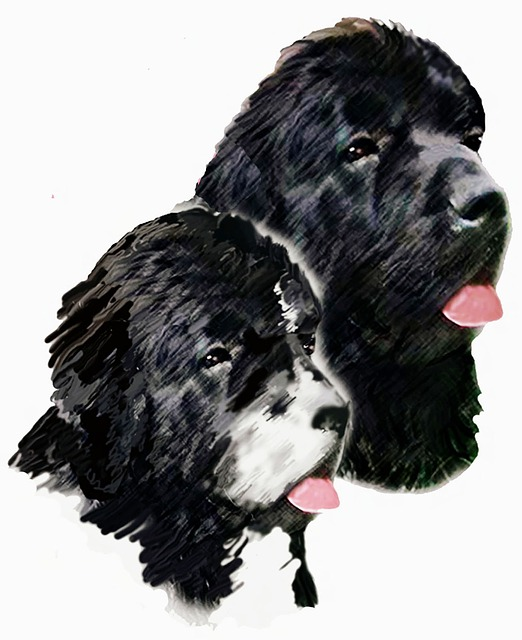 newfoundland dogs painting