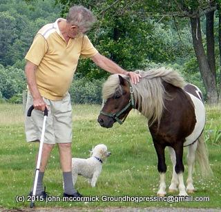 PTSD Puppy? Decades After WWII Lapdog Still Served Vet