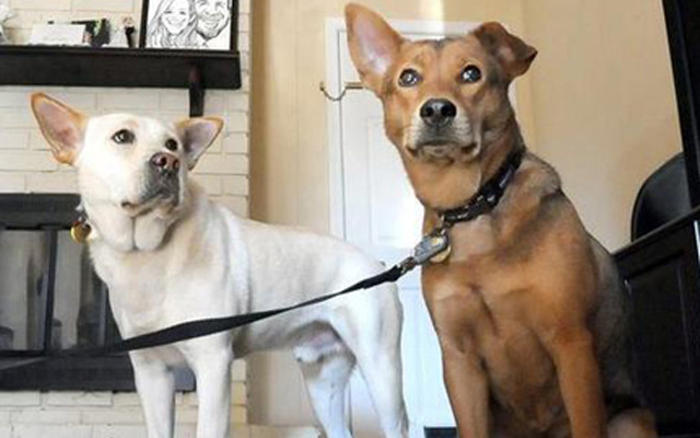 Can Dogs Fall In Love? This Story Proves It